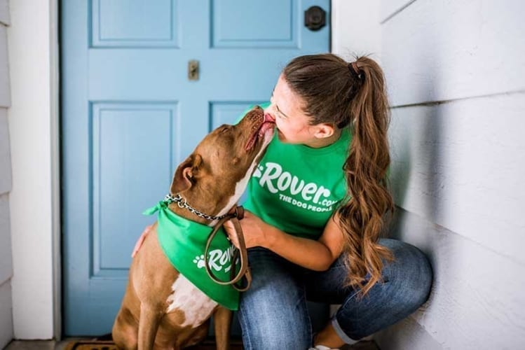 Rover pet sitter sign up