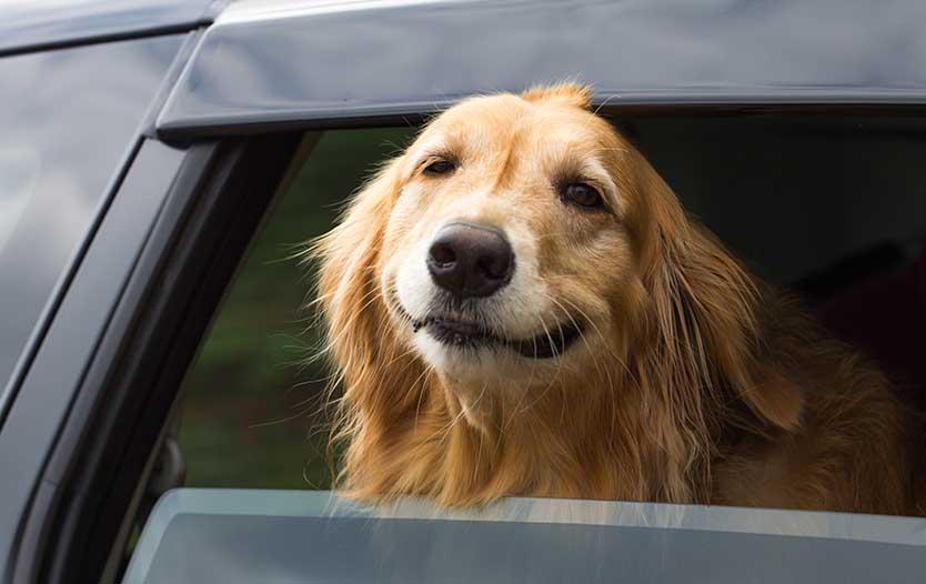 Uber Lyft Service Animal